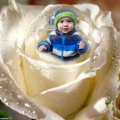 LITTLE ANGEL,11D.14